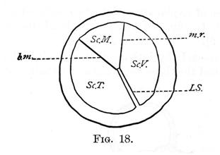 Figure 18 - Lamine Spiralis