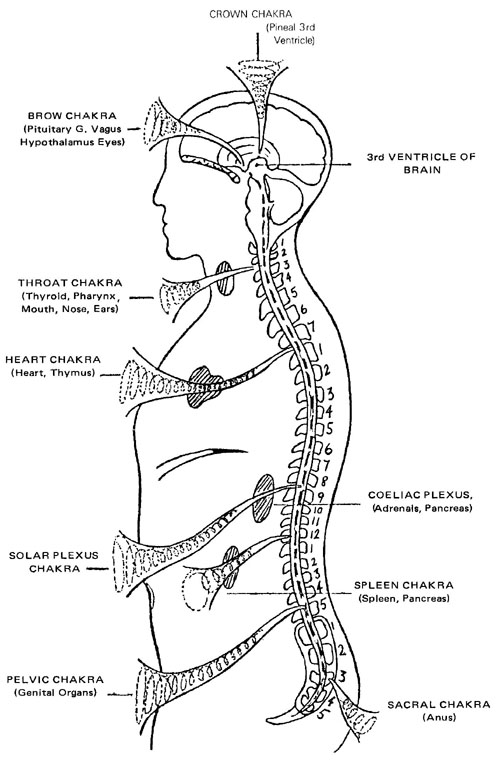 yoga and the endocrine system