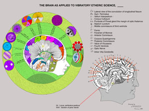 Brain as Applied to Vibratory Science