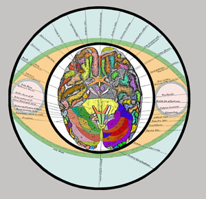 17 - Brain Section in Circle